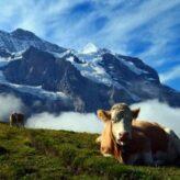 Švýcarské kantony